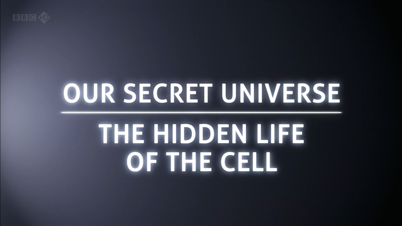 Hidden Life of a Cell
